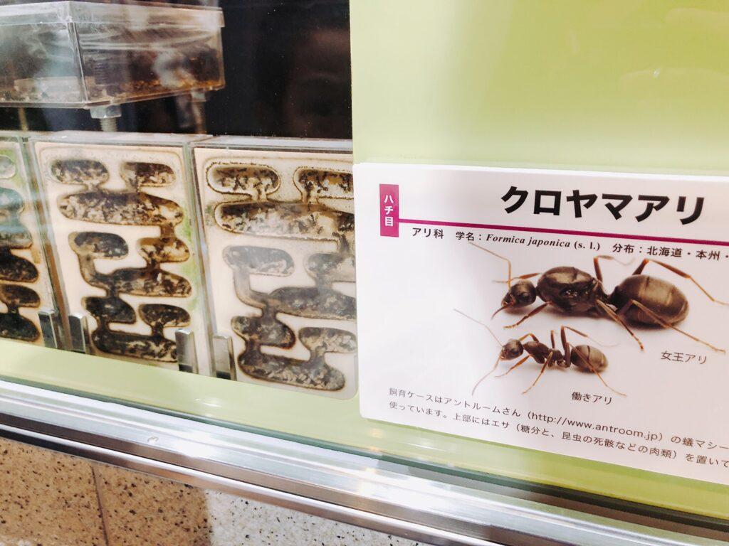 アリの巣の写真