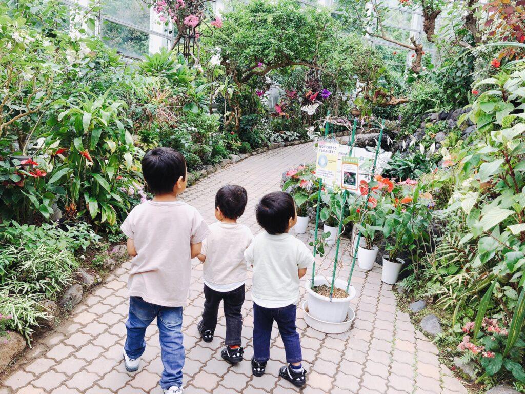 チョウ温室内の写真